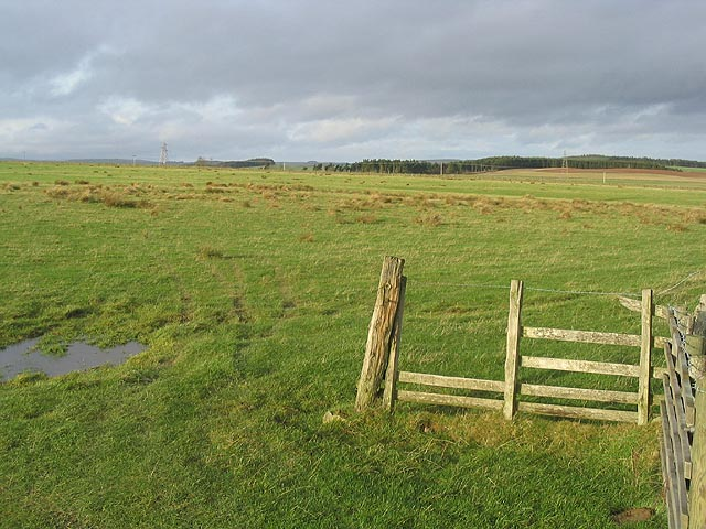 Rough grazing field