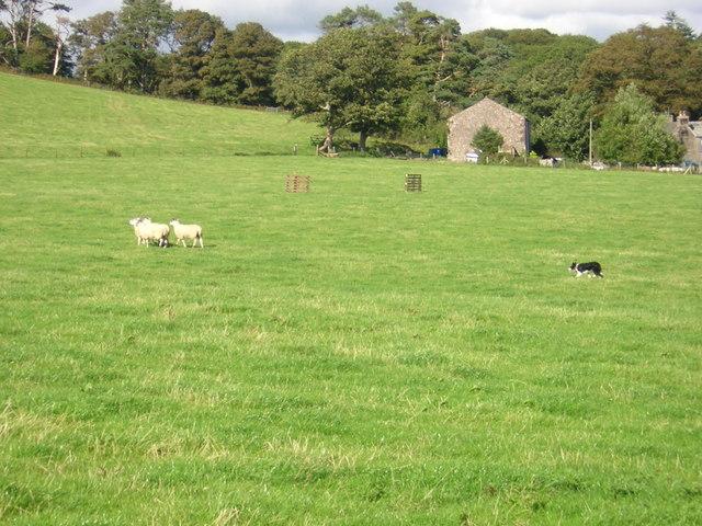 Muncaster Sheep Dog trials 2006