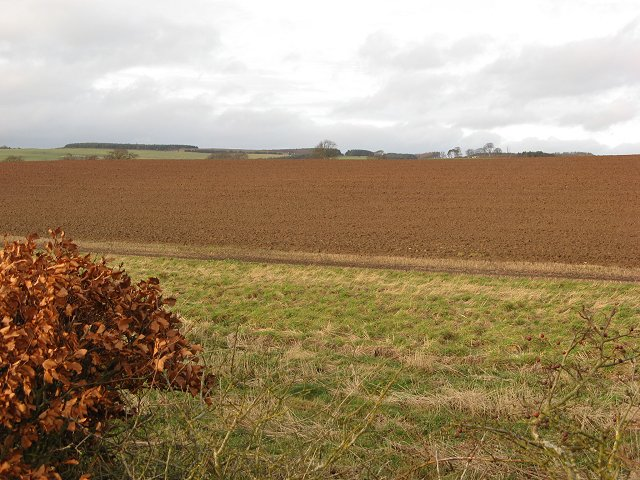 Ploughed field, Marden
