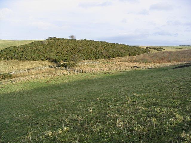 Gattonside Moss