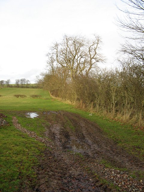 Wooded hedgerow, Cruicksfield