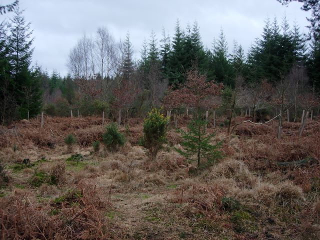 New broadleaf woodland