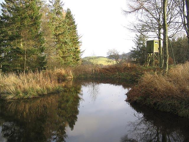 Duck pond in Camp Plantation