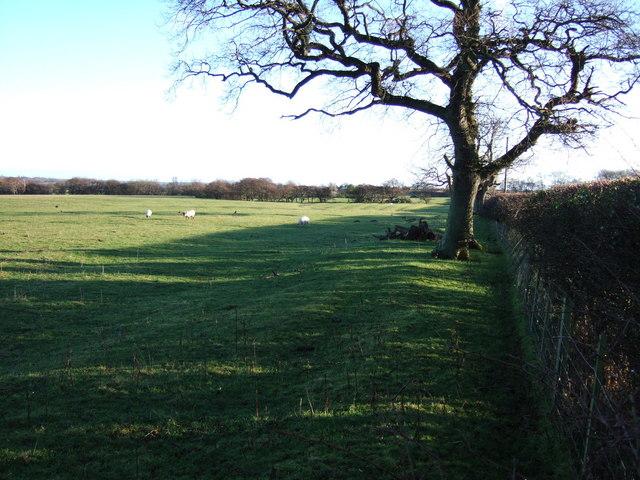 Field at Hedleywood