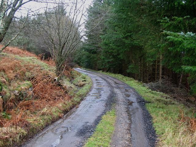 Forest Track through Glassie Wood near Aberfeldy