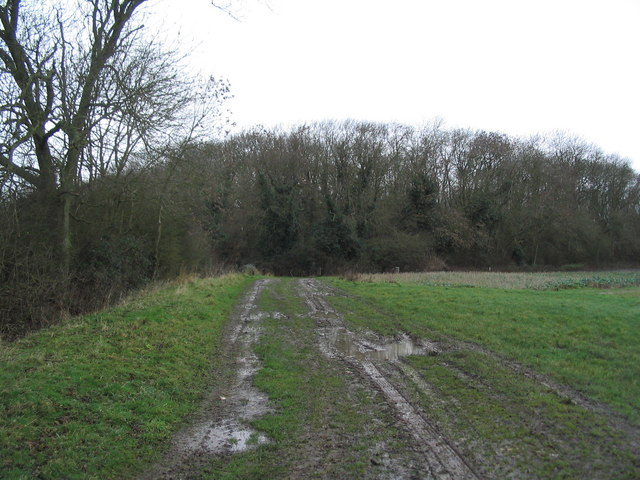 The south-east corner of Hermitage Wood