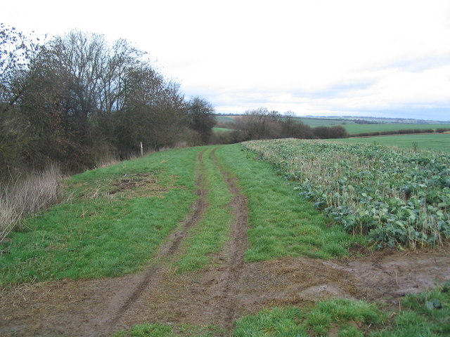 Track along field boundary, east of Dingley