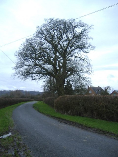 The road to Thornhill