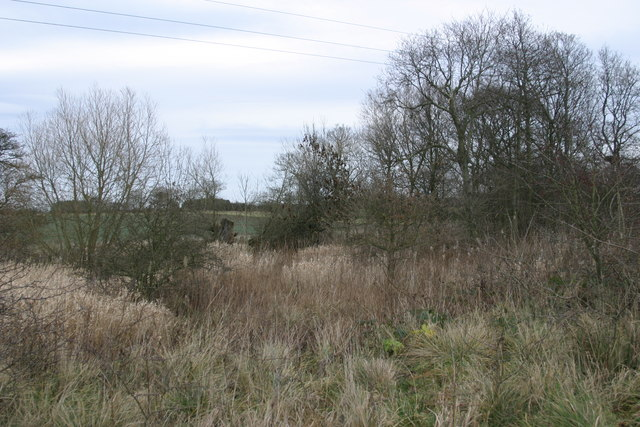 Marshland to the north of the track to the site of Brenkley Drift Mine