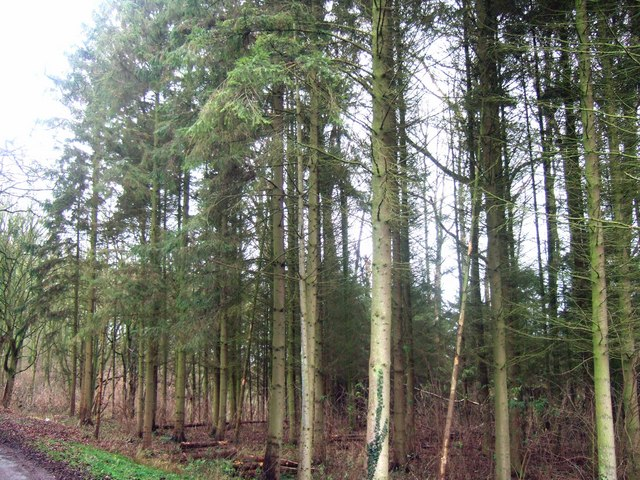 Stand of trees close to parking area, Wytham
