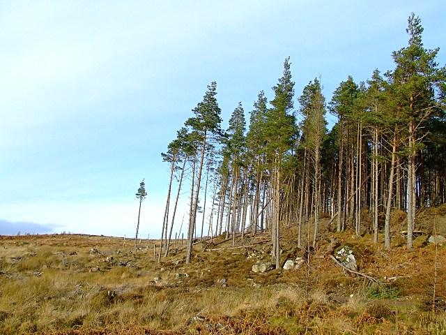 Linsidemore Wood