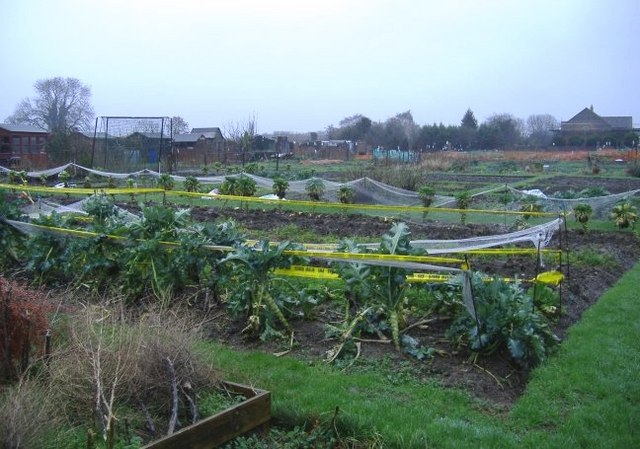 Allotments on Foxley Road