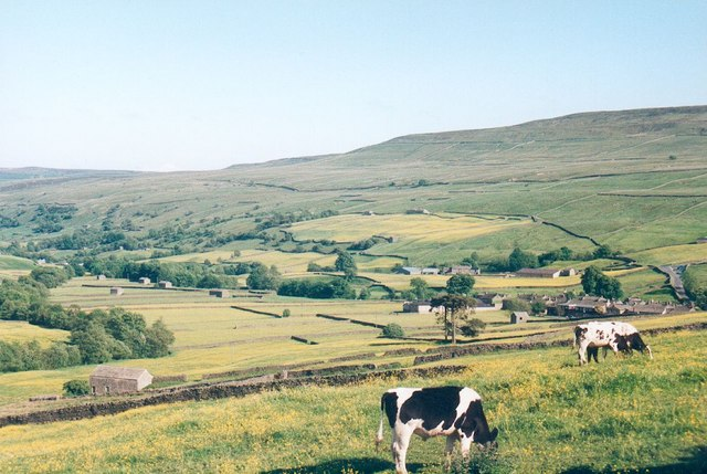 Buttercup time in Swaledale