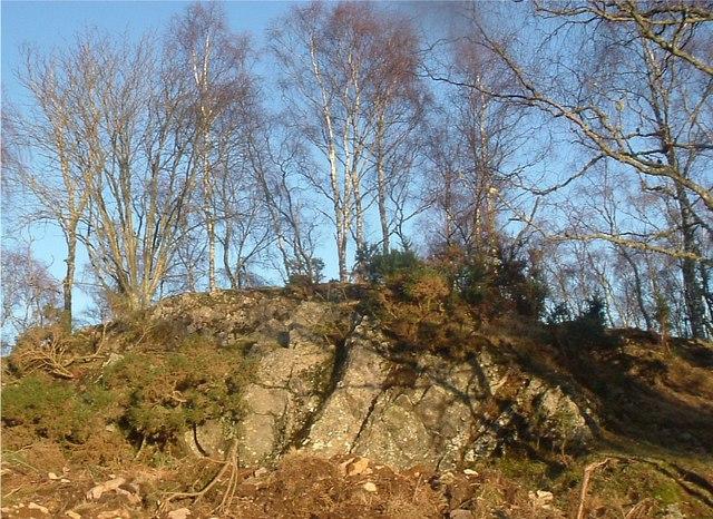 Birches on rock exposure, Bridgend.