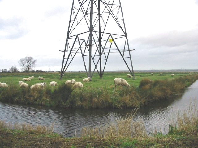 Sheep grazing under a pylon near Richborough Farm.