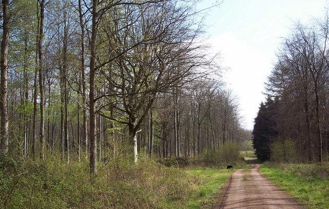 Gardiner Wood
