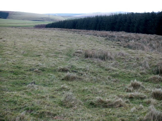 Rough grazing land and plantation, Clints Hill.
