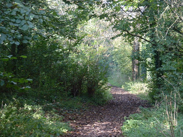 Looking along the public footpath through the woods