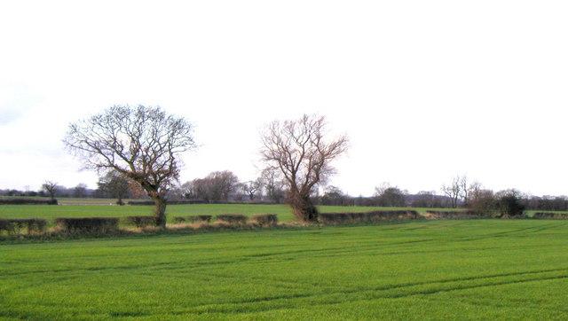 Farmland from Fog Lane