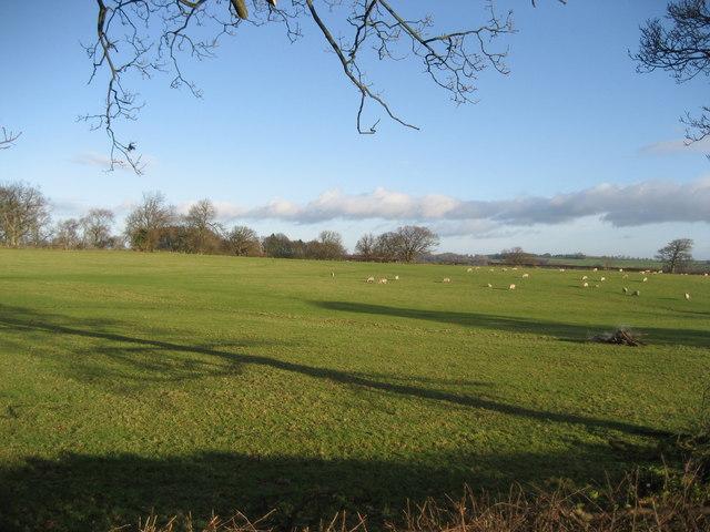 Fields east of Fearby