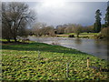 SO0391 : Swollen River Severn at Caersws. by Hefin Richards