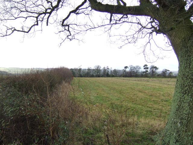 View to Bromham Plantation