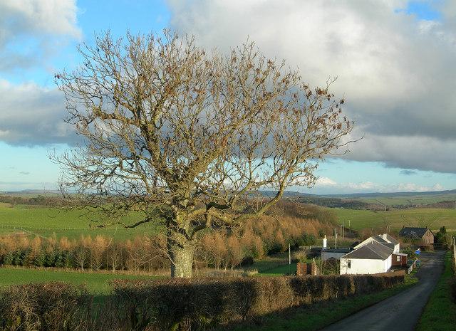 Towards Laigh Grange
