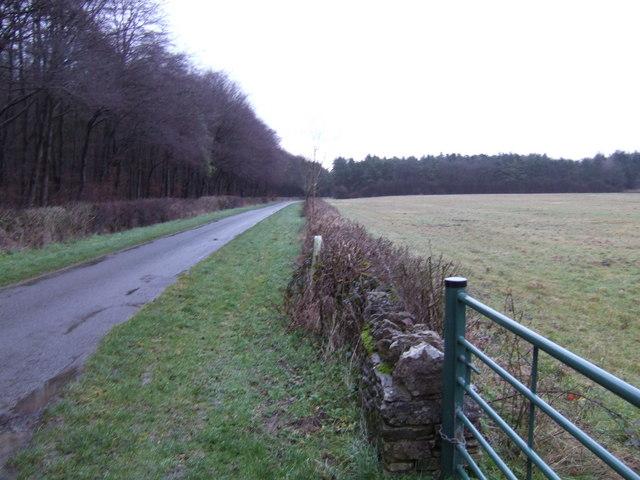 Lane and woodland