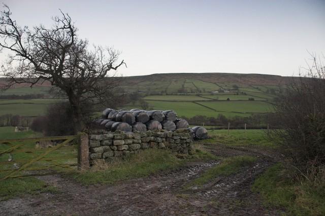 Silage Bales near West Green Farm