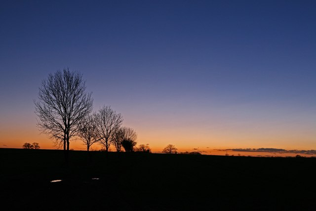 Trees near Kings Ripton at dusk