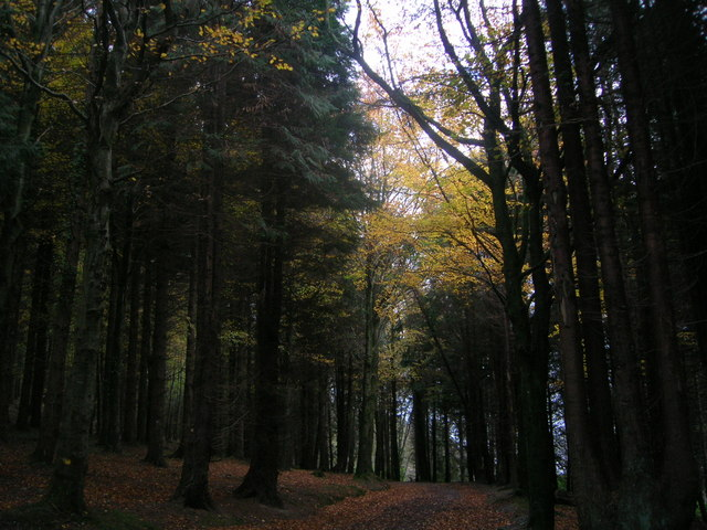 Black Isle Forest