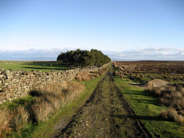 Track beside Witton Moor