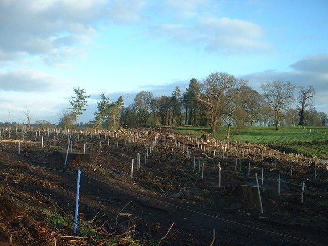 New Wood at Hardwick