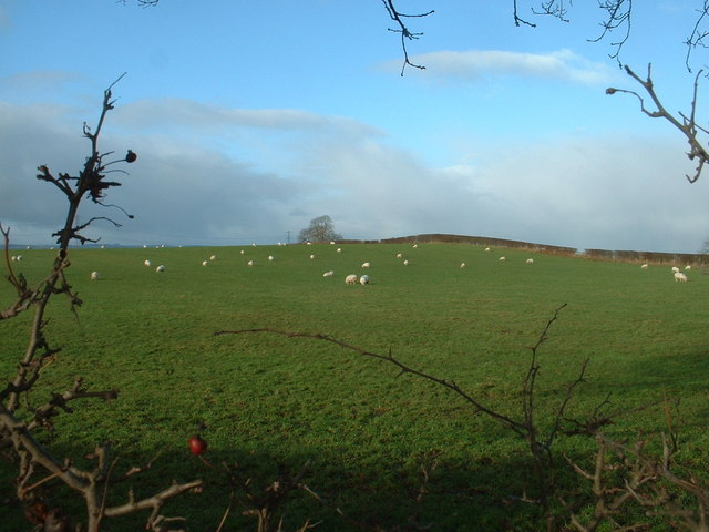 Farmland near Hordley