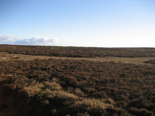 Witton Moor