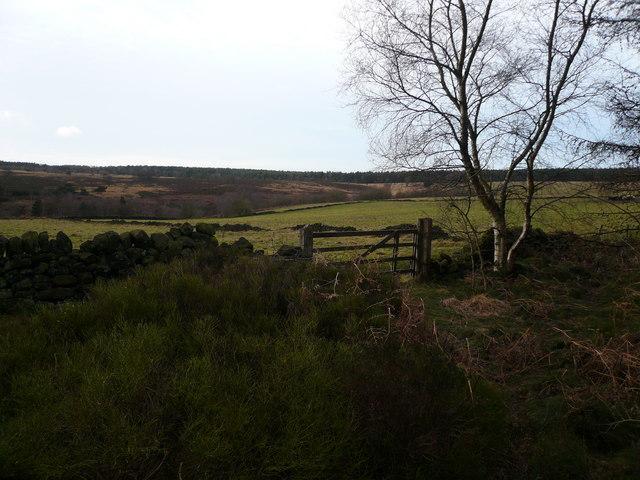 Bottom Moor