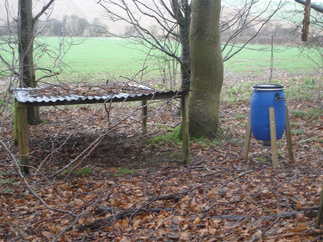 Food and shelter for pheasants