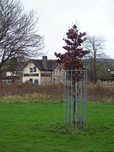 Jubilee Tree