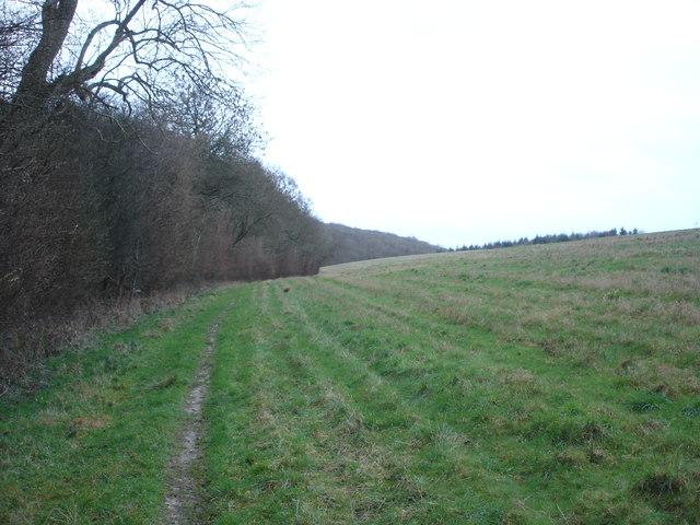 Beside Lower Well Wood