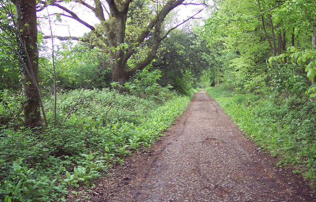 Green and Leafy  Old Shaston Drove