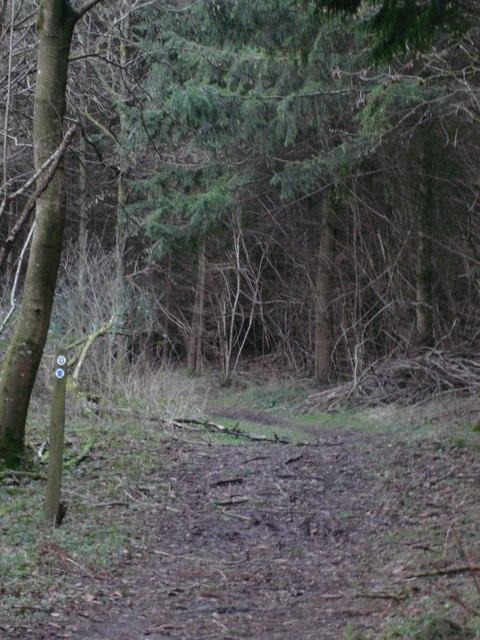 Walking through Heth woods