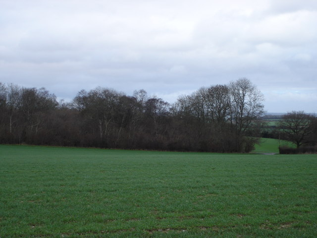 Southeastern end of Bishop's Coppice
