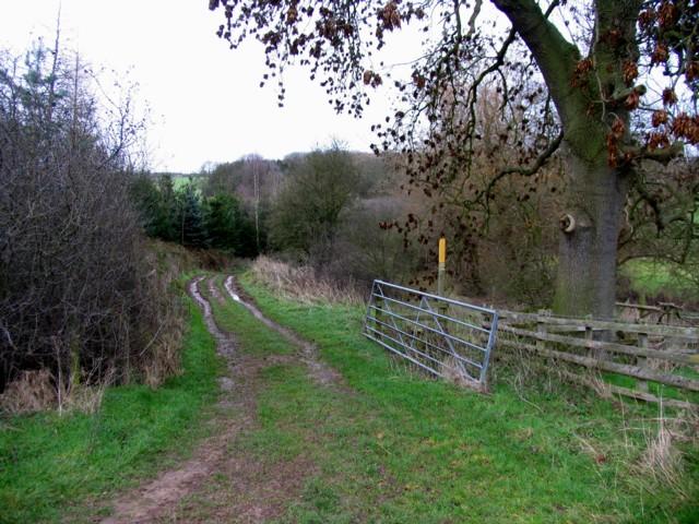 Track to Wardley Wood