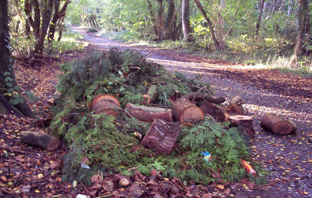 Green Waste on the Old Shaston  Drove