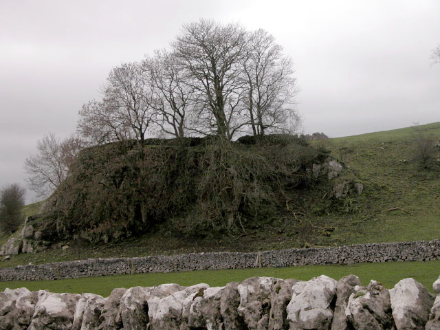 Trees on a limestone outcrop.