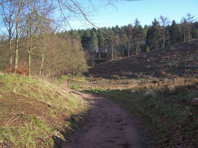 The Edge of Cannock Chase