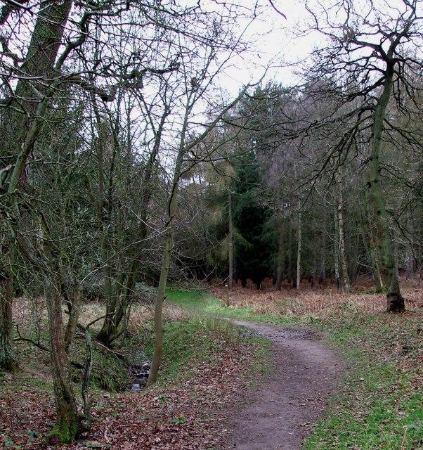 Path into Buttermilk Wood near Lowe's Wood