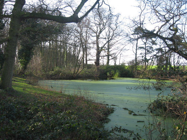 Pond in Woodland near Site of Hale Hall