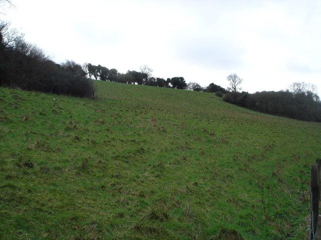 Steep slope below Rapshell Plantation