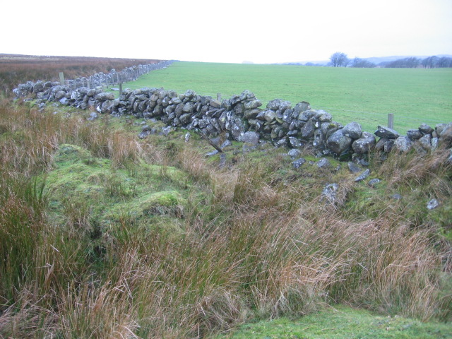 Boundary wall near Hawkwood farm
